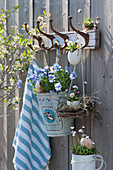 Osterdeko an Garderobenhaken: Hornveilchen 'Sorbet XP f1 Marina' und Gänseblümchen in Eierschalen, Osternest aus Zweigen und Heu
