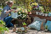 Frau gießt Korb mit Narzissen und Hornveilchen, österliche Kiesterrasse mit Holz-Osterhasen und Kranz aus Zweigen