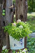 Gartenkresse mit Ostereiern im Eimerchen aufgehängt