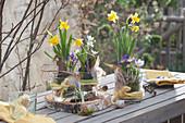 Frühlingsdekoration mit Narzissen, Milchstern und Krokus auf Birkenholz-Scheibe