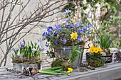 Vorfrühling in bepflanzten Backformen mit Narzissen, Krokus, Strahlenanemone und Primel