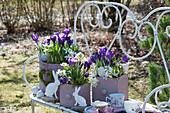 Ostern auf Bank im Garten mit Krokus und Milchstern