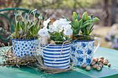 Frühlings-Arrangement mit Traubenhyazinthen, Hornveilchen und Tulpen in blau-weißen Töpfen