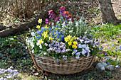 Bunter Frühlingskorb im Garten
