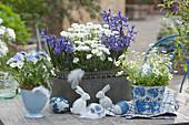Blau-weiße Osterdekoration mit Hyazinthen, Schleifenblume, Hornveilchen und Moossteinbrech