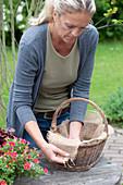 Frau legt Korb zum Bepflanzen mit Jute aus
