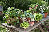 Topf - Arrangement mit Kohlrabi, Erdbeeren, Salat, Schnittlauch und Petersilie auf Terrassentisch