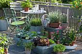 Küchengarten auf dem Balkon: Kohlrabi, Salat, Schnittknoblauch, Schnittlauch, Petersilie, Rucola, Muskateller-Salbei, Brenngeleepflanze