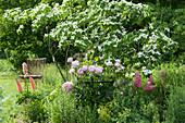 Blumenhartriegel mit Pfingstrose und Lupinen