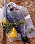 Raw gilthead bream with thyme and lemon