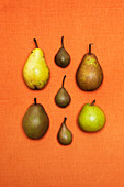 Pears on orange background