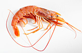 Argentinian red shrimp on a white surface