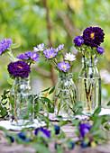 Violette Sommerastern in Flaschen