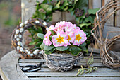 Nest mit Primeln auf einer Gartenbank