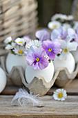 Hühnereier als Vase mit Blüten von Gänseblümchen und Hornveilchen