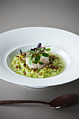 Green asparagus risotto with scallops
