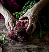 Person holding bunch of fresh organic beets with dirty hands