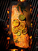 Cedar-planked salmon with citrus and herbs over flames and coals