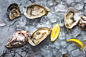 Fresh oysters in ice with lemon