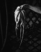 Hand hält frischen Tintenfisch (Schwarz-Weiß-Aufnahme)