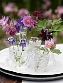 Verschiedene Akeleien in Rosa, Violett und Lila in Glasväschen