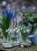 Traubenhyazinthen, Märzenbecher, Efeu und Schneeglöckchen in Glasvasen