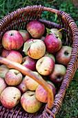 Frische Äpfel im Korb