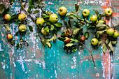 Frische Äpfel mit Zweigen und Blättern