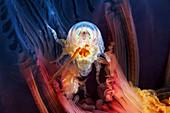 Amphipod inside a jellyfish