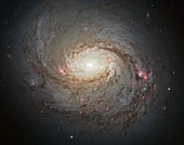 Messier 77 spiral galaxy,Hubble image