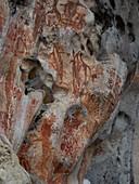 Rock art,Indonesia