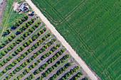 Farmland along the Yarkon stream,Israel,aerial photograph