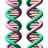 DNA molecules,illustration