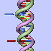 DNA mutations,conceptual image