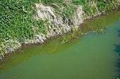 Algal pollution.