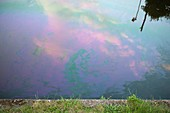 Oil slick on canal.