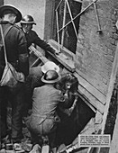 One by one the trapped are released, 1940 (1942)