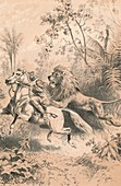 African Traveller Attacked by A Lion, c1880