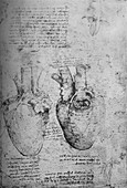 Two Drawings of the Heart, c1480 (1945)