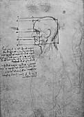 Study of a Mans Nude Torso, c1480