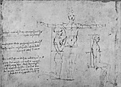 Studies of the Proportions of Three Figures, c1480 (1945)