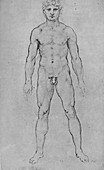 A Nude Man seen from the Front, c1480 (1945)
