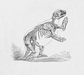 Skeleton of the Mylodon Darwinii, c1885, (1890)
