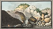 Hot spring, Pisciarelli, 1776