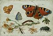 Three Butterflies, a Beetle and other Insect, early 1650s