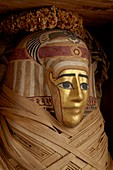 Ptolemaic coffin, mummy with gilt mask and floral garland