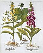 Herb Paris, Common Foxglove, Yellow Foxglove