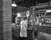 Soft drink bottling plant, Swinton, South Yorkshire, 1960