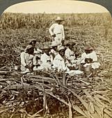 La Union sugar plantation, Santiago Province, Cuba, 1899
