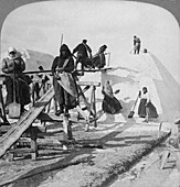 Stacking salt in the salt fields of Solinen, Russia, 1898